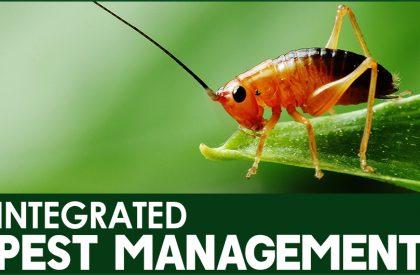 integrated_pest_management