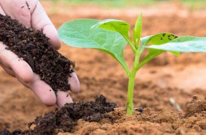 soil-fertility-applying-manure